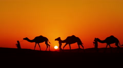Aerial drone of camels being led by handlers across desert sand dunes Stock Footage
