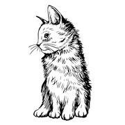 Cat Kitten hand drawn Piirros