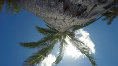 Looking straight up a palm tree Stock Footage