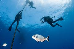 group of diver under boat for deco time in the blue sea background - stock photo