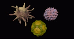 Pollen grains, bacteria, virus microbial structures extreme close up Stock Footage