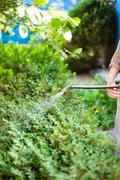 farmer processing bushes by pesticide on backyard - stock photo