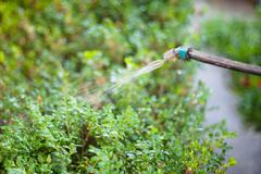 treatment of backyard by pesticide against pests - stock photo