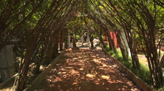 Camera Moves Through Decorative Tree Tunnel Specially Grown Stock Footage