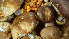 Boletus edulis and Cantharellus. Mushrooms. Stock Footage
