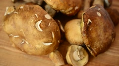 Boletus edulis. Mushrooms. Stock Footage