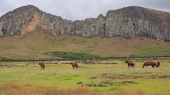 Horses walking on the stunning Hanga Roa landskape, Easter Island Stock Footage