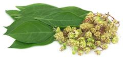 Ayurvedic henna flower with leaves Stock Photos