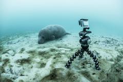 Underwater camera on tripod filming sleeping manatee, Sian Kaan biosphere - stock photo
