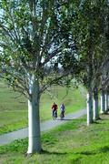 Couple cycling on tree lined cycle path around Lake Balaton, Budapest,Hungary Stock Photos