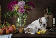 Still life with puppy dog in classical Dutch style Stock Photos