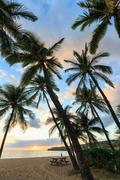 Palm trees at sunset, Hulopo'e Beach Park, Lanai Island, Hawaii, USA Stock Photos