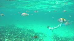 School of yellow striped fish in ocean Stock Footage