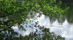 Alder tree branch over lake Stock Footage