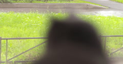 gray cat looking out the window then turn around - stock footage