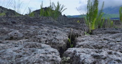 Plants grow in extreme conditions of harsh volcanic environment. Rocky land view Stock Footage