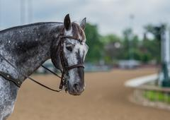 Grey Pinto Horse and Track - stock photo