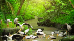 Idyllic nature background of flora and fauna of tropical jungle forest in Asia Stock Footage