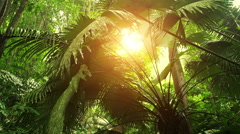 Rays of sun light shine through tropical rain forest canopy. Jungle nature view - stock footage
