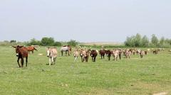 donkeys on field - stock footage