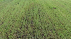 Aerial Shot Country Side Farming - stock footage