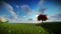 Solitary tree on green meadow, time lapse clouds Stock Footage