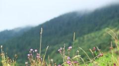 Fog over the Carpathian Mountains, Ukraine Stock Footage