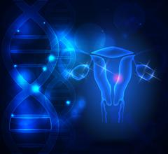 Female reproductive organs Stock Illustration