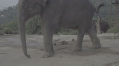 Funny dancing elephant on a hill in Phuket, Thailand - stock footage