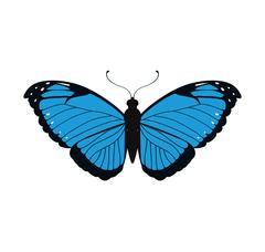 Blue Butterfly icon. Insect design. Vector graphic Stock Illustration