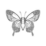 Butterfly icon. Insect design. Vector graphic Stock Illustration