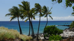 Group of Palm trees on Lapakahi State Beach in Hawaii Stock Footage