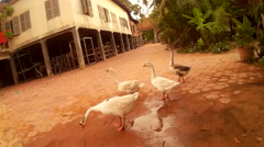Action cam POV bike rider in Asian pagoda with geese, exit to dirt road - stock footage