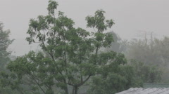 Strong winds and rain shaking big trees Stock Footage