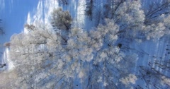 snowcapped firry and leafy trees in Siberian taiga - stock footage