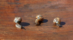 Family of snails on a chair under the sun. Stock Footage