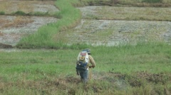 A man is spraying a herbicide in the paddyfield Stock Footage
