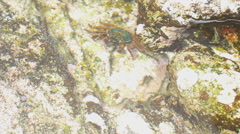 Crab and fish at low tide Stock Footage