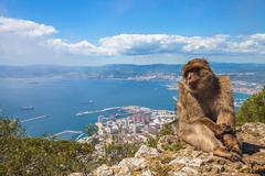 Ape of Gibraltar Stock Photos