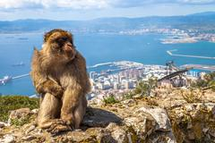 Apes Den Gibraltar Stock Photos