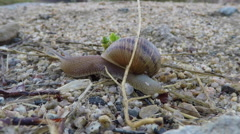 Moving Snails Macro Time Lapse - stock footage