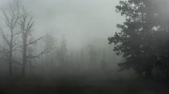Creepy Old Forest with Rolling Fog 4K Loop - stock footage
