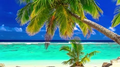Waves on a vibrant tropical beach with palm tree, Cook Islands Stock Footage
