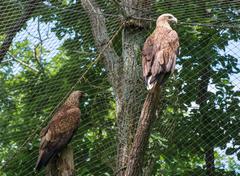 Eagles Kuvituskuvat