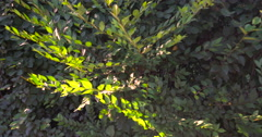 Green leafs background Stock Footage