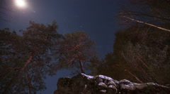 Moonlit night in the mountain forest Stock Footage
