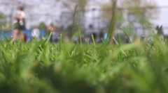 Children have fun on playground in park on sunny weekend day, focus on foregr Stock Footage