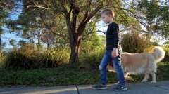 Little boy walking his golden retriever in the park on sunny day Stock Footage