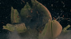 Melon Exploding in slow motion Stock Footage