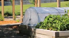 Small organic vegetable garden in urban area. Stock Footage